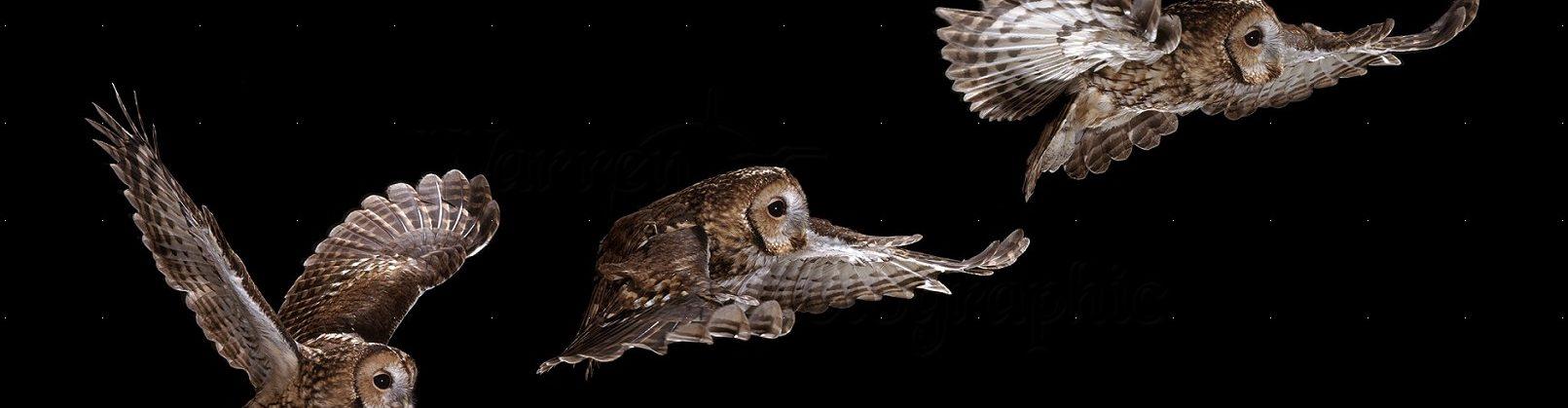 Tawny Owl Class
